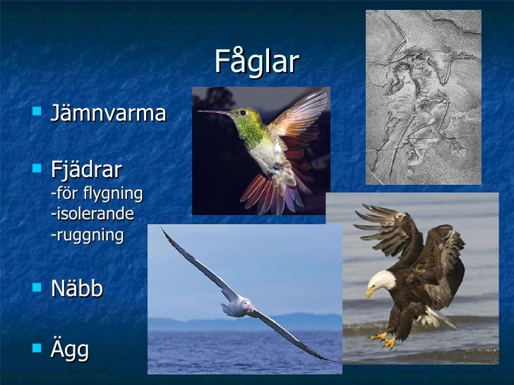 Fåglar <ul><li>Jämnvarma </li></ul><ul><li>Fjädrar -för flygning -isolerande -ruggning </li></ul><ul><li>Näbb </li></ul><u...