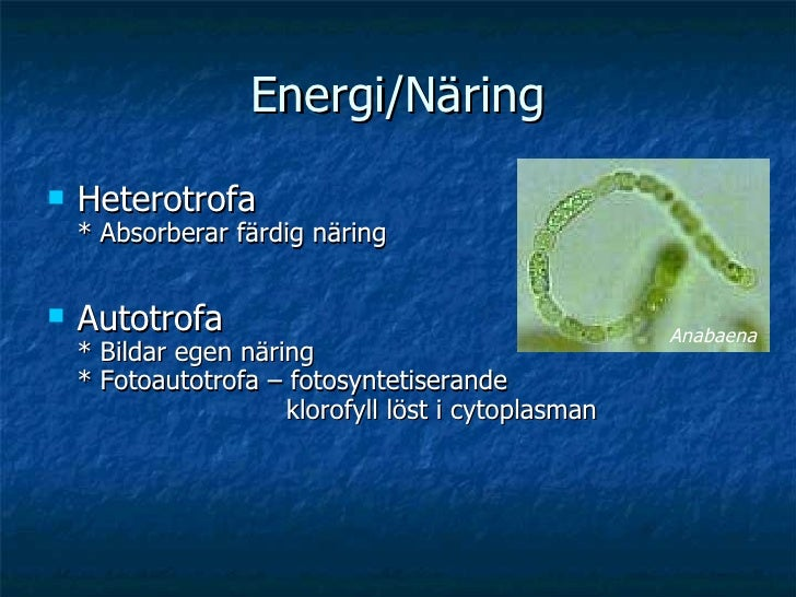Energi/Näring <ul><li>Heterotrofa * Absorberar färdig näring </li></ul><ul><li>Autotrofa * Bildar egen näring * Fotoautotr...