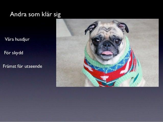 Andra som klär sigVåra husdjurFör skyddFrämst för utseende
