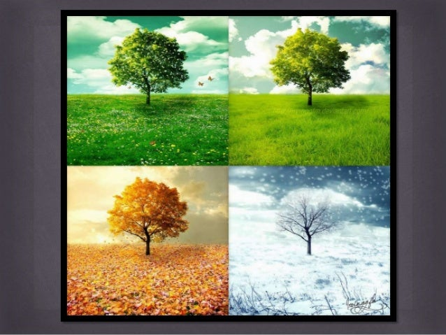Vegetation cover ng kanlurang asya | College paper Help