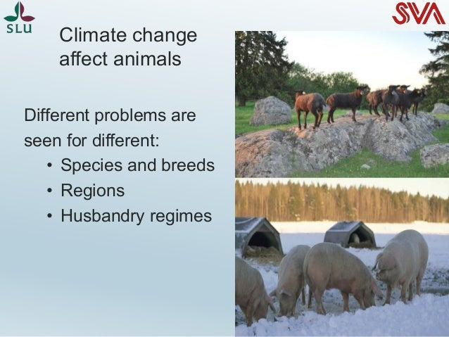 the influence of climate change on This is the most important long-lived forcing of climate change methane a hydrocarbon gas produced both through natural sources and human activities, including the decomposition of wastes in landfills, agriculture, and especially rice cultivation, as well as ruminant digestion and manure management associated with domestic livestock.