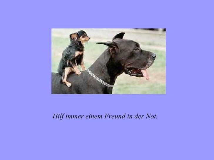 Hilf immer einem Freund in der Not.
