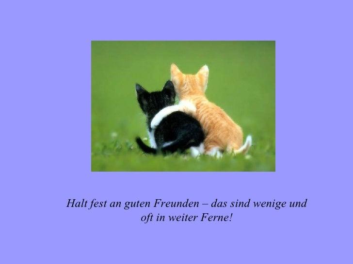Halt fest an guten Freunden – das sind wenige und                oft in weiter Ferne!