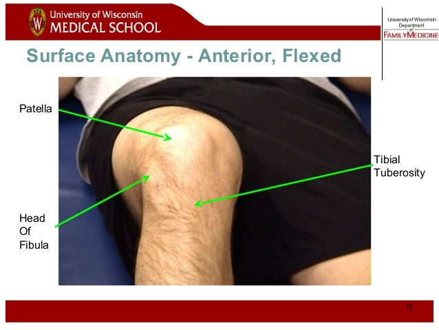 Knee 25 normal knee anterior flexed 26 ccuart Gallery
