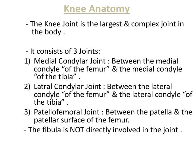 Knee joint anatomy knee ccuart Gallery