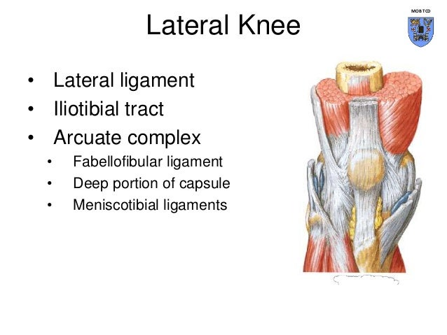 Knee joint anatomy posterolateral corner ccuart Images