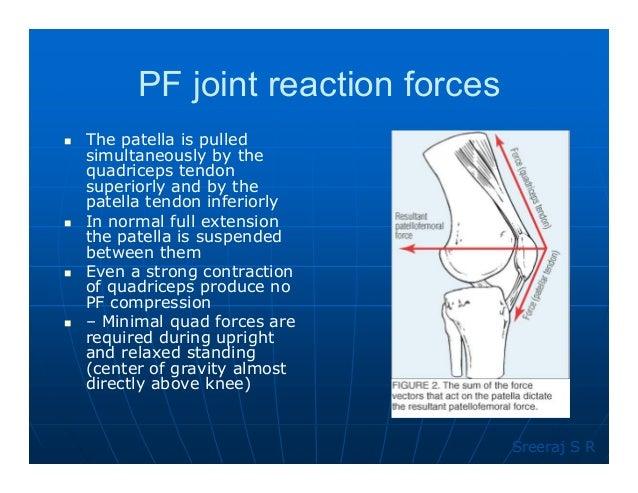 Knee biomechanics 59 ccuart Image collections