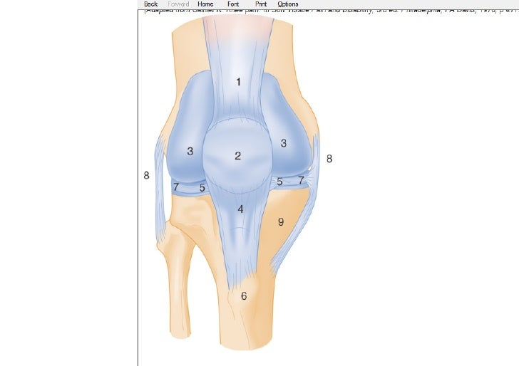 Knee Injuries Clinical Serise