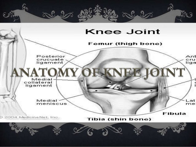 FORMATION OF KNEE JOINT  IT IS A LARGE AND COMPLICATED JOINT OF THE BODY.  IT IS COMPLEX DUE TO FUSION OF THREE JOINTS. ...