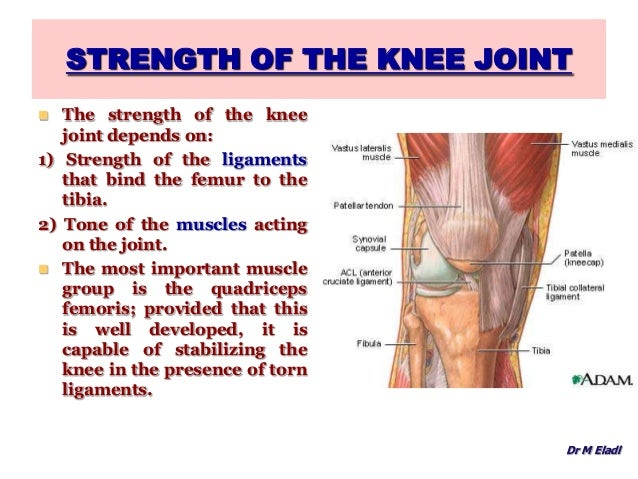 Anatomy of the knee joint gracilis muscles 33 ccuart