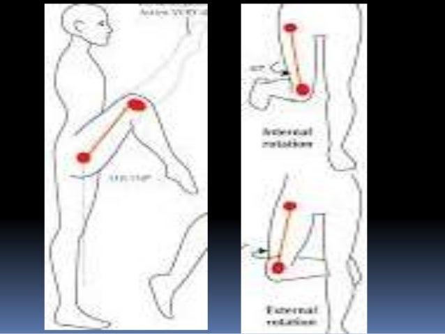 knee anatomy movement gallery