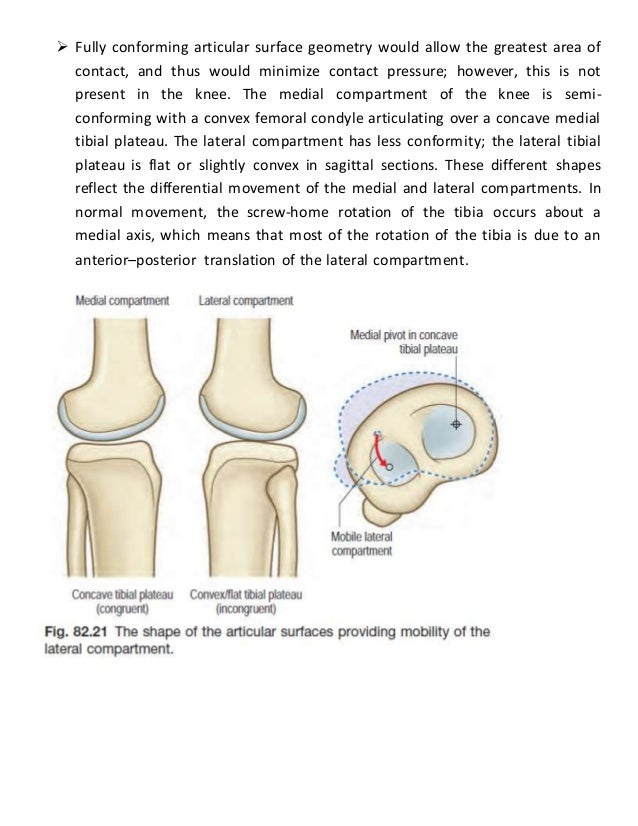 Knee joint - Bio-mechanic notes