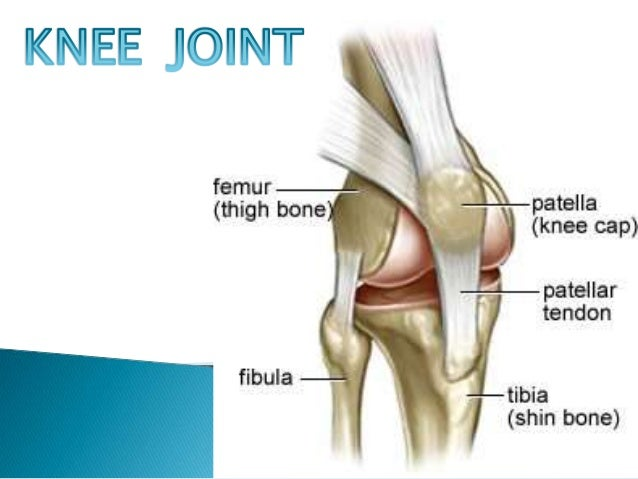 Knee Joint Ps3