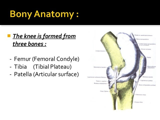 Knee Ligaments