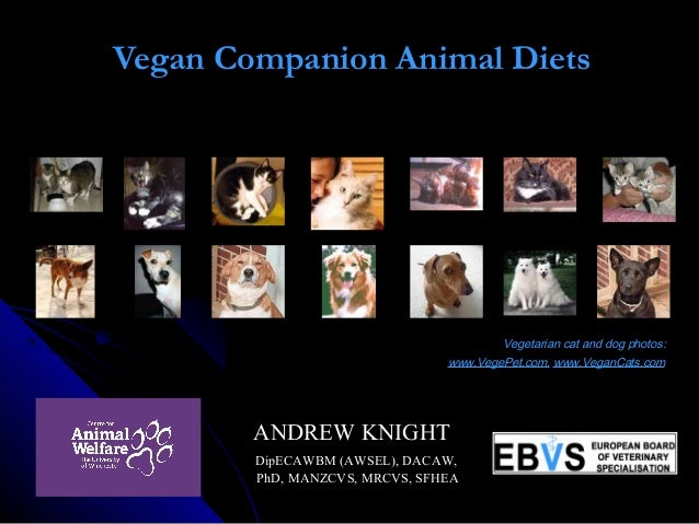 Vegan Companion Animal Diets      Vegetarian cat and dog photos: www.VegePet.com, www.VeganCats.com ANDREW KNIGHTANDREW KN...