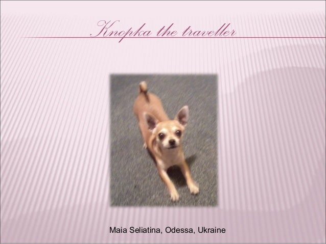 Knopka the traveller Maia Seliatina, Odessa, Ukraine