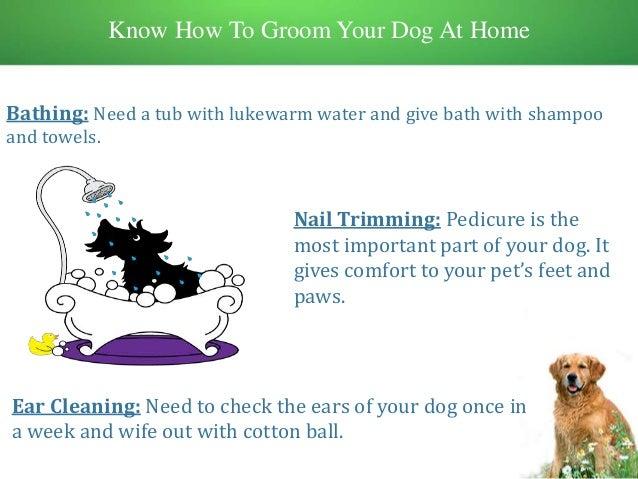 Defur Dog Grooming