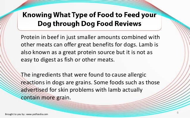 Easiest Foods For Dogs To Digest