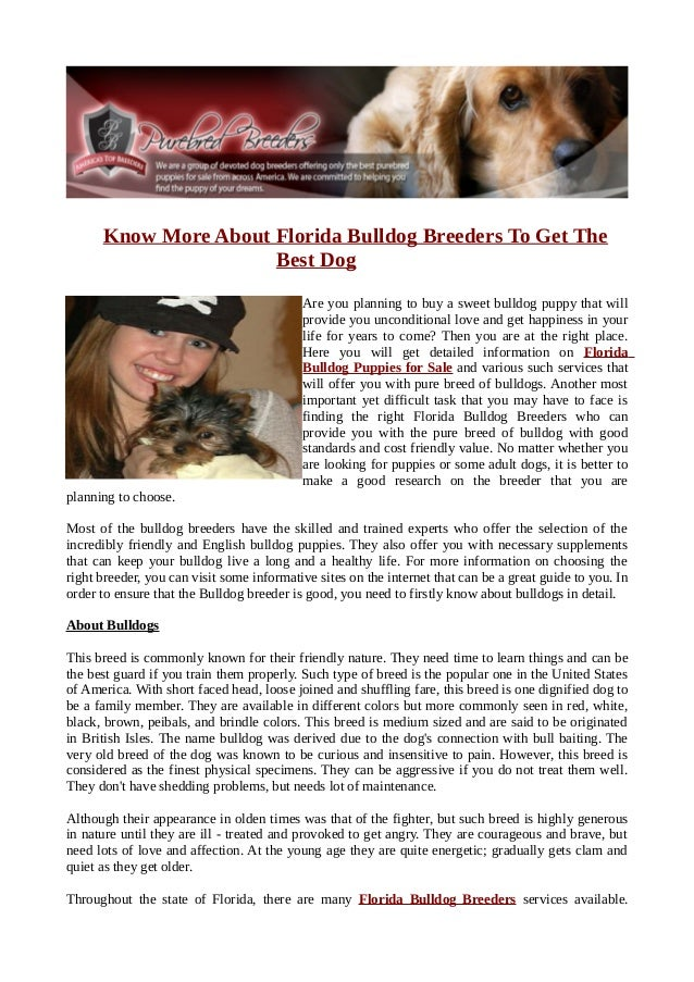 Know More About Florida Bulldog Breeders To Get The                      Best Dog                                         ...