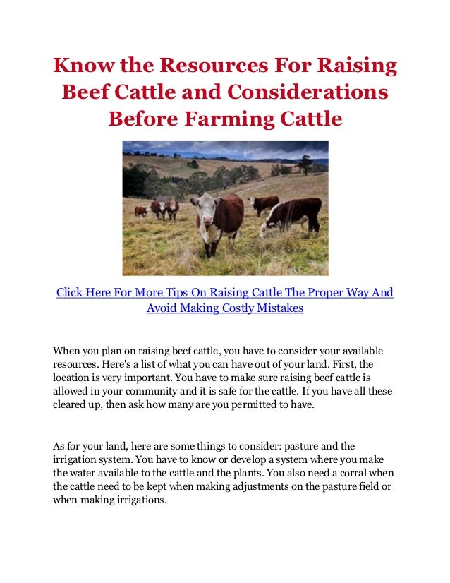 Know the Resources For Raising Beef Cattle and Considerations     Before Farming CattleClick Here For More Tips On Raising...