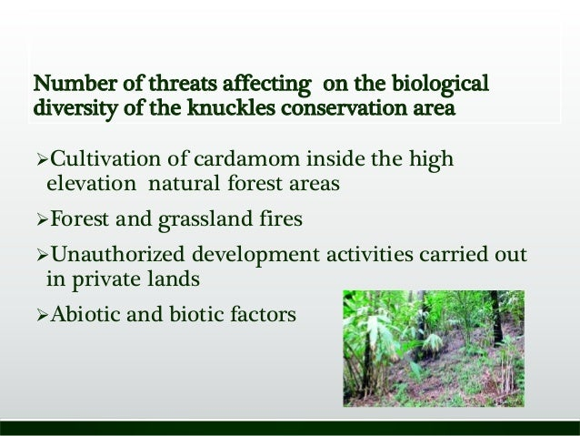 Number of threats affecting on the biological diversity of the knuckles conservation area Cultivation of cardamom inside ...