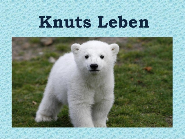 Knuts Leben