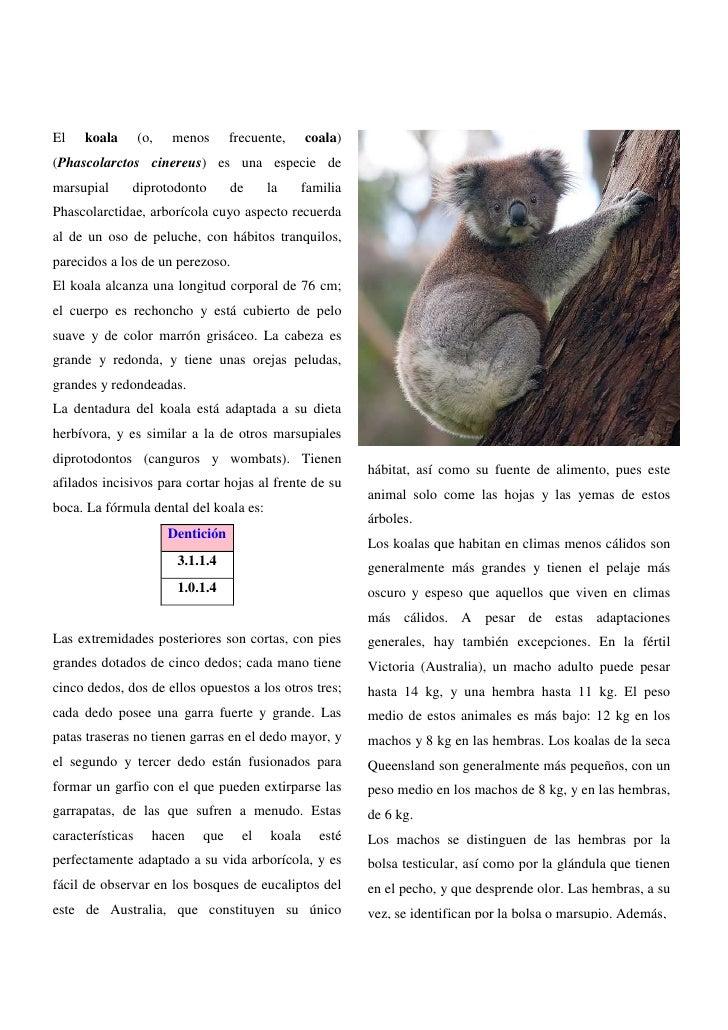 El   koala        (o,   menos       frecuente,     coala)(Phascolarctos cinereus) es una especie demarsupial     diprotodo...