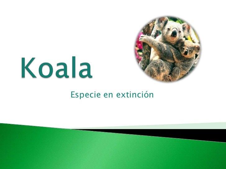 Koala<br />Especie en extinción<br />