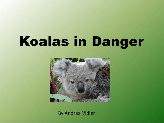 Koalas in Danger     By Andrea Vidler