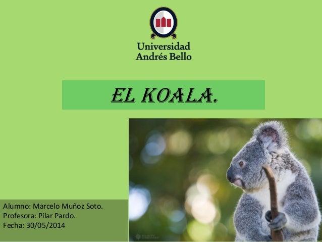 Alumno: Marcelo Muñoz Soto. Profesora: Pilar Pardo. Fecha: 30/05/2014 EL koala.