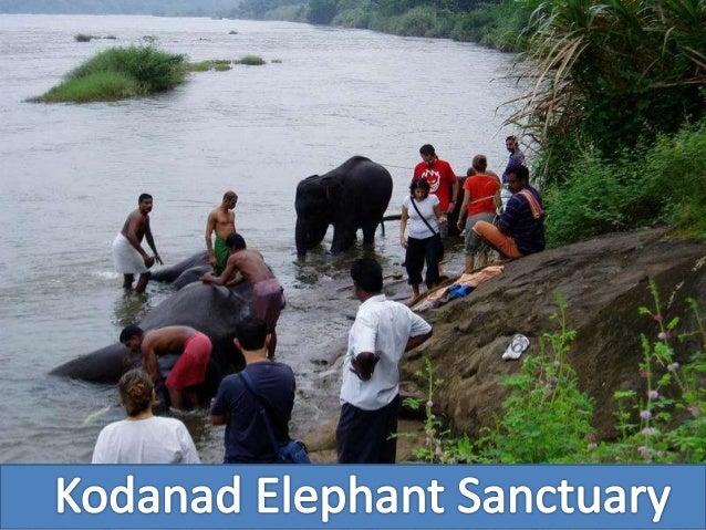 Kodanand Elephant Training Centre