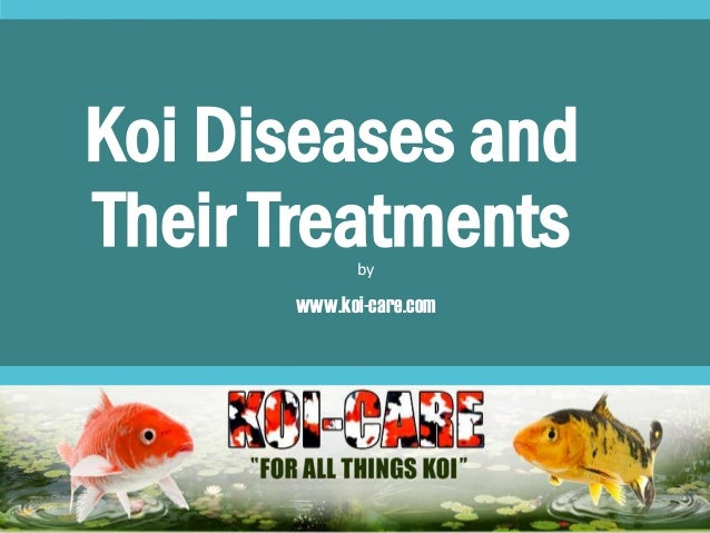 koi carp breeding
