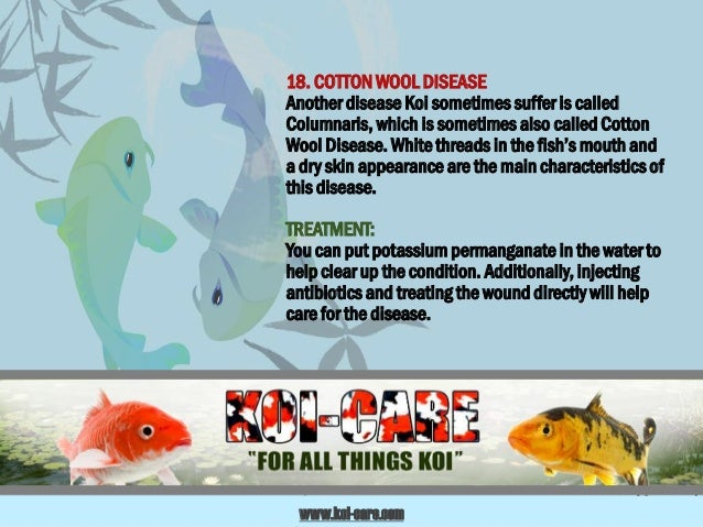 Koi diseases and their treatments for Cotton wool disease in fish