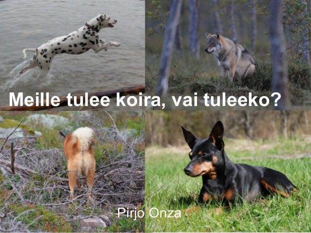 Meille tulee koira, vai tuleeko?  Pirjo Onza