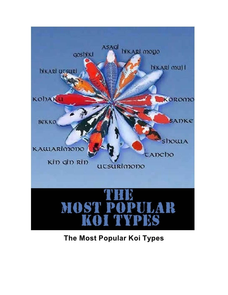 The Most Popular Koi Types
