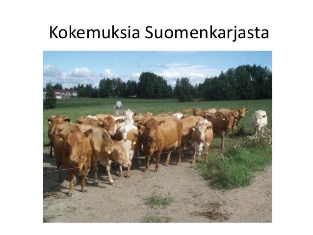 Kokemuksia Suomenkarjasta