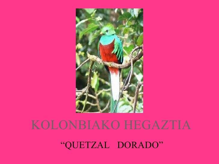 """KOLONBIAKO HEGAZTIA """" QUETZAL  DORADO"""""""
