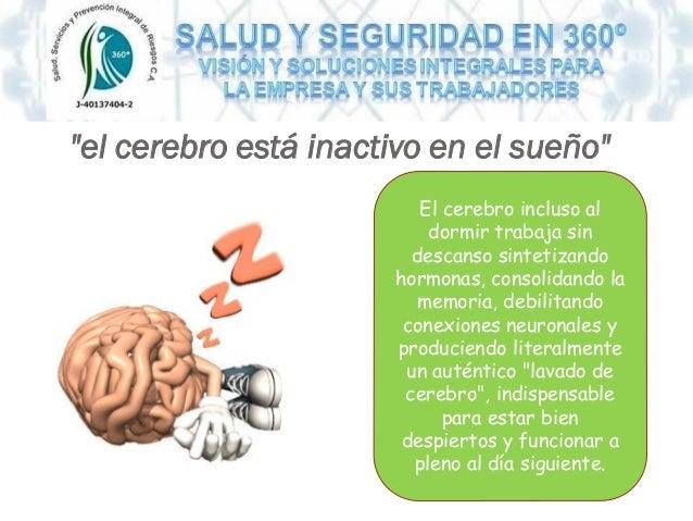 """""""el cerebro está inactivo en el sueño"""" El cerebro incluso al dormir trabaja sin descanso sintetizando hormonas, consolidan..."""