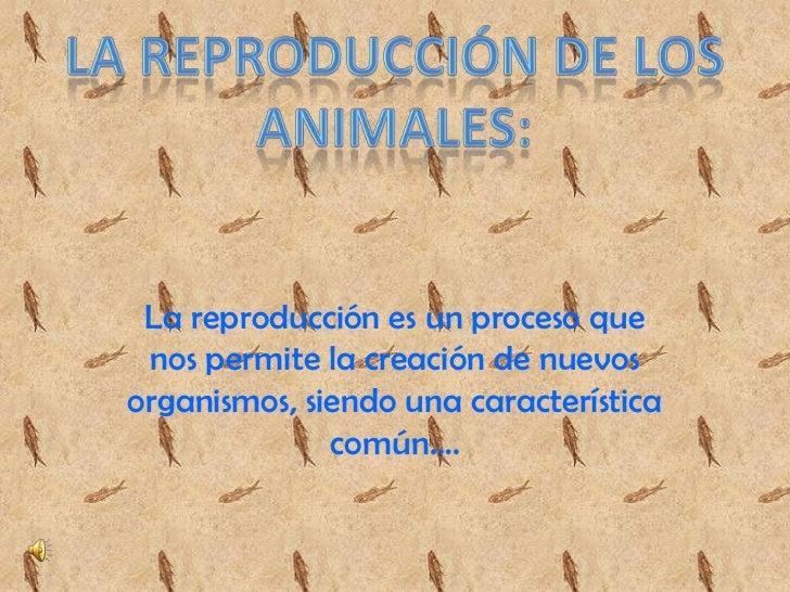 La reproducción es un proceso que nos permite la creación de nuevosorganismos, siendo una característica              comú...