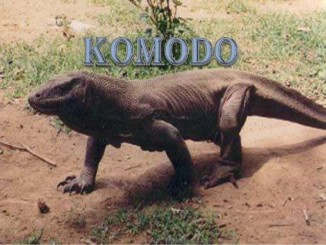 70 Gambar Hewan Langka Komodo Terbaik