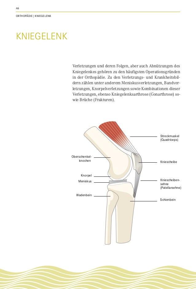 Ungewöhnlich Menschliche Oberschenkelknochen Bild Ideen - Anatomie ...