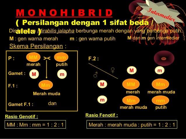 Konsep hereditas mendel intermediet 14 ccuart Choice Image