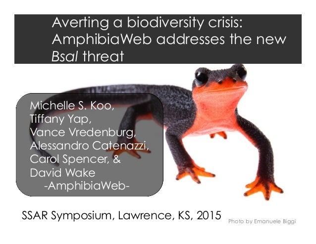 Averting a biodiversity crisis: AmphibiaWeb addresses the new Bsal threat Photo by Emanuele Biggi Michelle S. Koo, Tiffany...