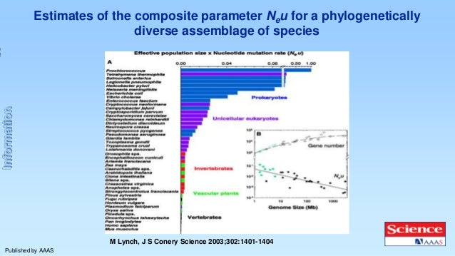 Information  Estimates of the composite parameter Neu for a phylogenetically diverse assemblage of species  M Lynch, J S C...