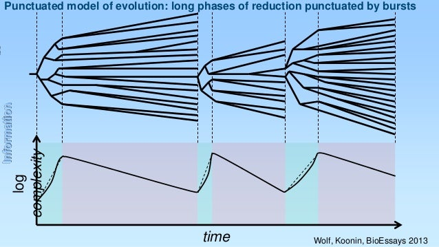 log complexity  Information  Punctuated model of evolution: long phases of reduction punctuated by bursts  time  Wolf, Koo...
