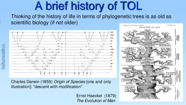 A brief history of TOL  Information  Thinking of the history of life in terms of phylogenetic trees is as old as scientifi...