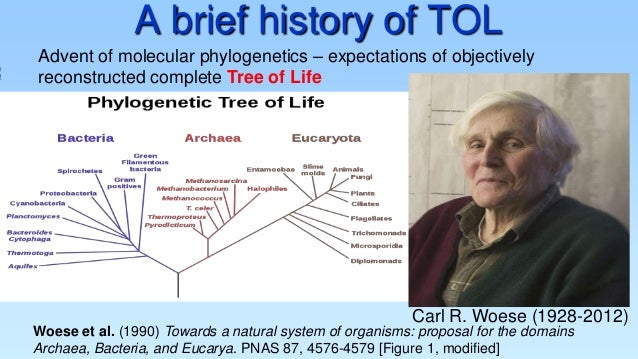A brief history of TOL  Information  Advent of molecular phylogenetics – expectations of objectively reconstructed complet...