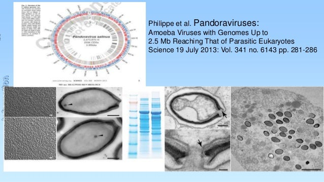 Information  Philippe et al. Pandoraviruses: Amoeba Viruses with Genomes Up to 2.5 Mb Reaching That of Parasitic Eukaryote...