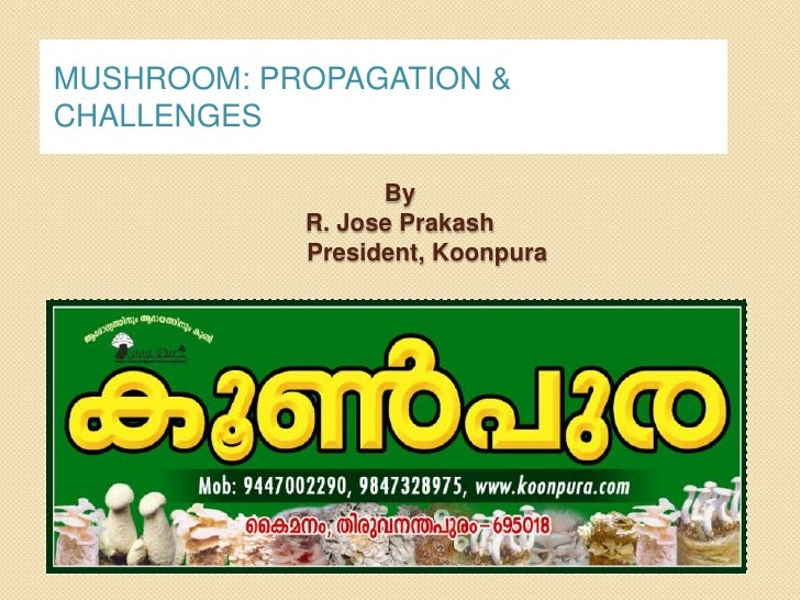 MUSHROOM: PROPAGATION &CHALLENGES                  By            R. Jose Prakash            President, Koonpura