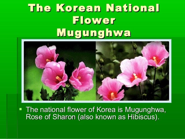 korea ppt korean national flower